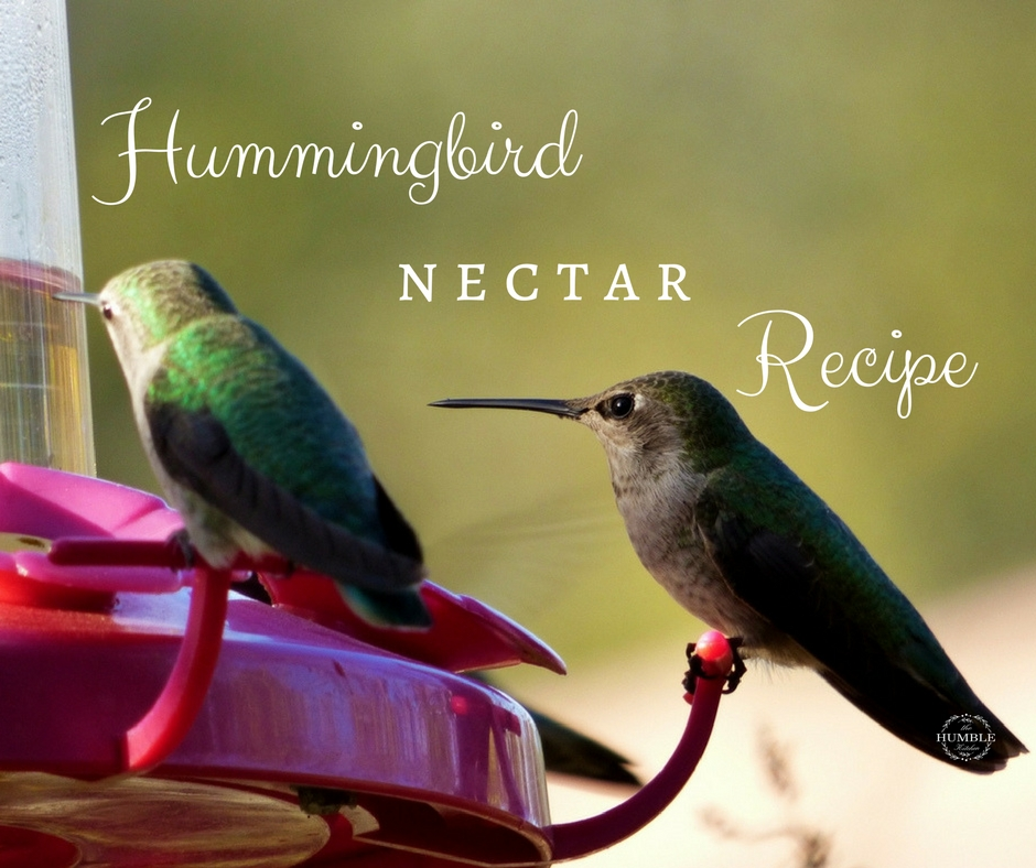 two hummingbirds sitting at red feeder. hummingbird nectar recipe