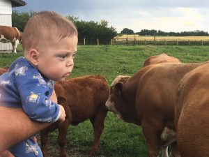 Ex 26 Weeker watching the cows and bulls